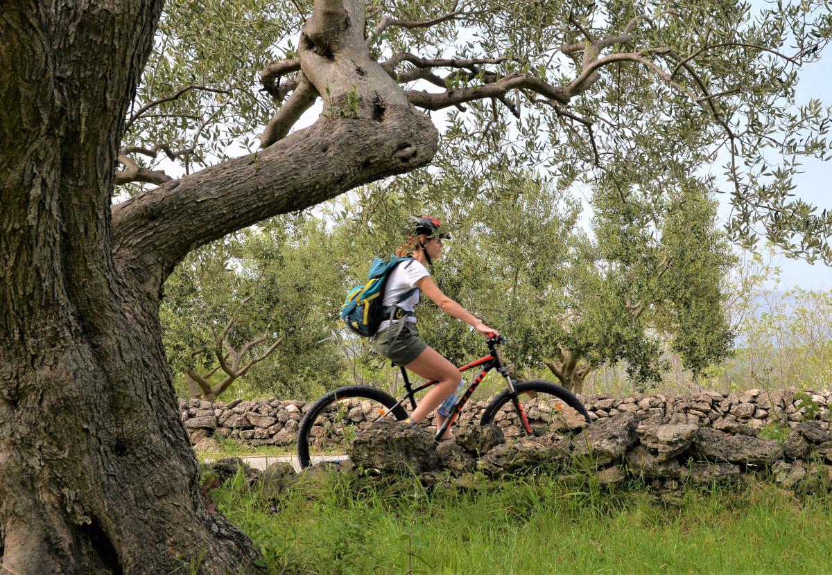 hvar rower dalmacja2