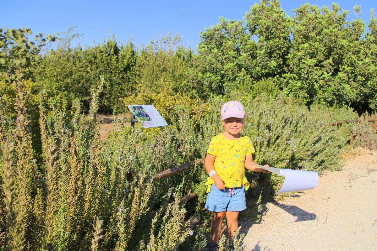 Poszukiwanie informacji o owadach w ogrodzie
