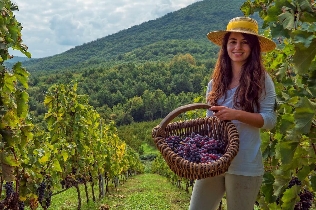 wina Grecji Naousa Dalamaras Merakos