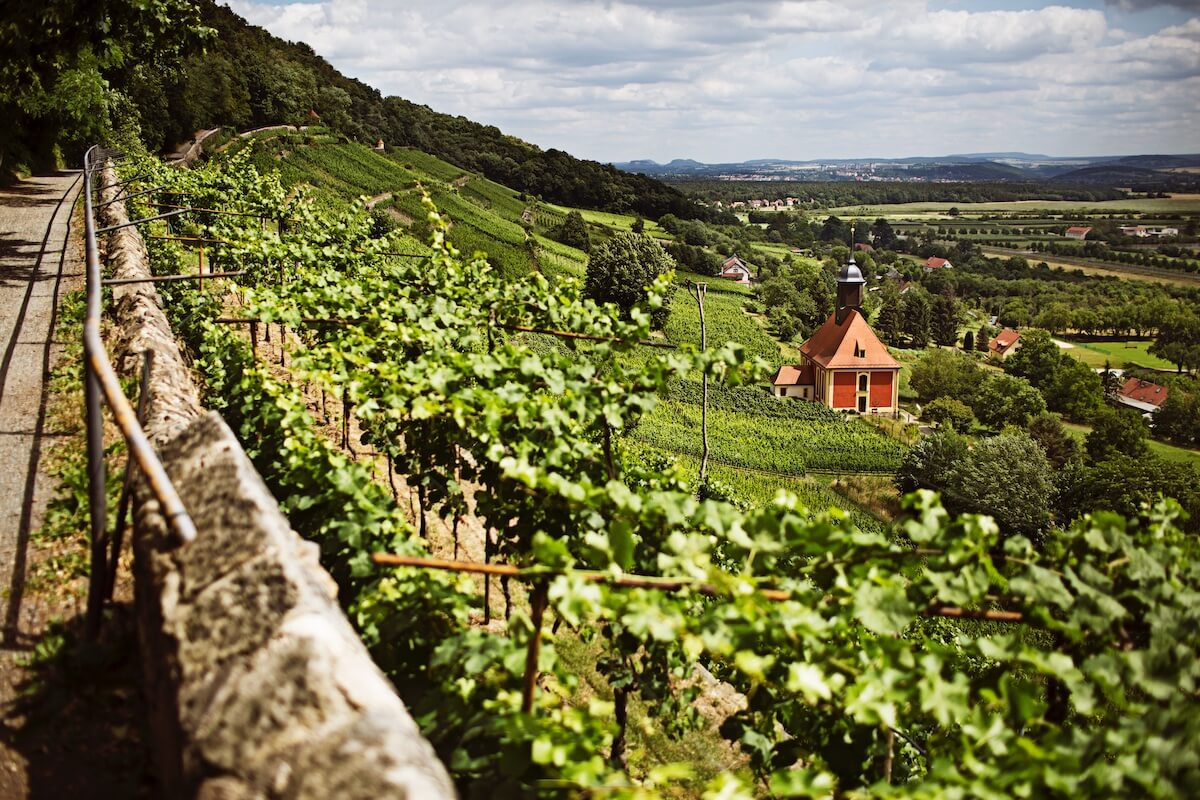 Saksonia: widok na winnice